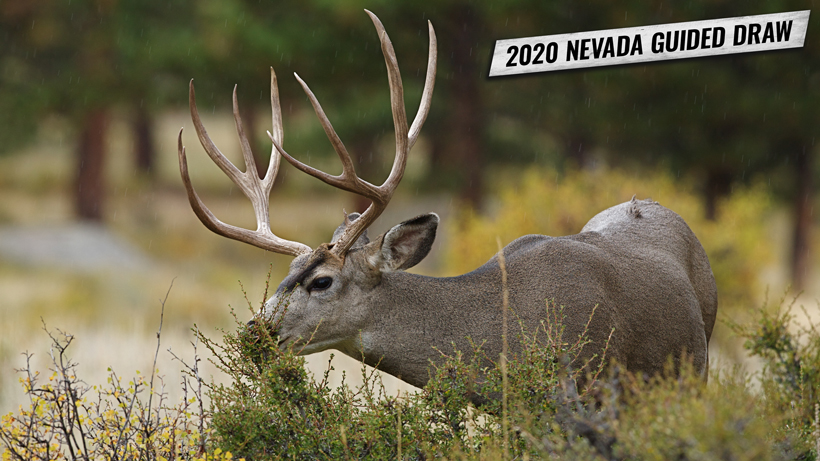Nevada guided draw 2020