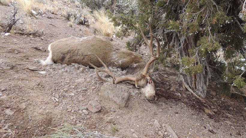 descriptive hunting essay