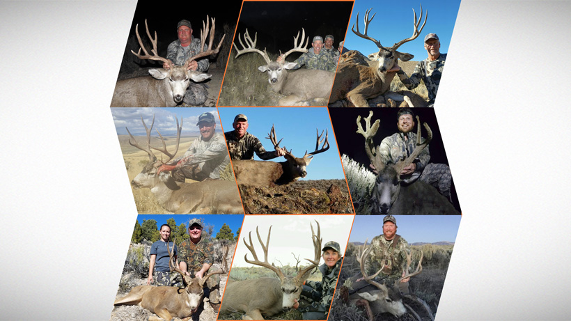 How to apply for Nevada's mule deer guided draw