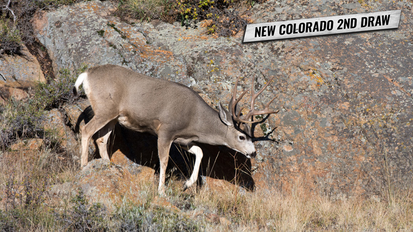 New Colorado second draw for hunting licenses