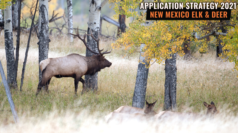 Application Strategy 2021: New Mexico Elk & Deer