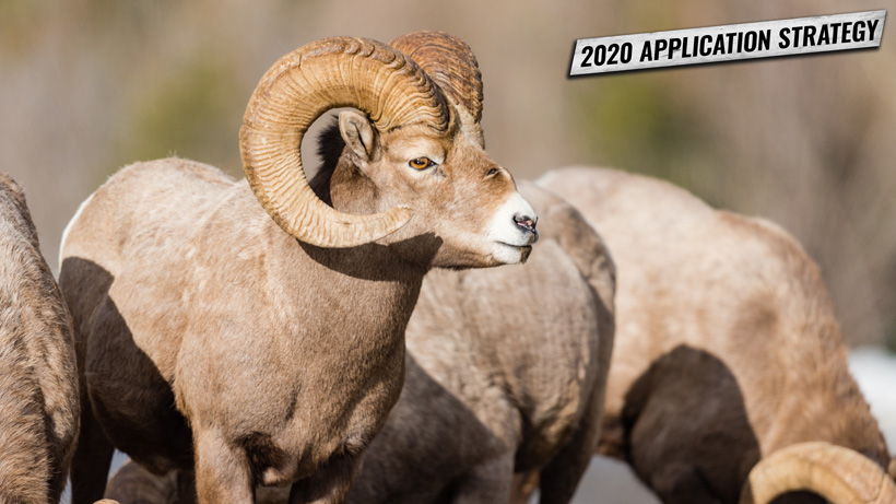 New Mexico 2020 sheep and antelope application strategy