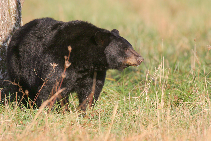 New Utah bear hunting seasons for 2015