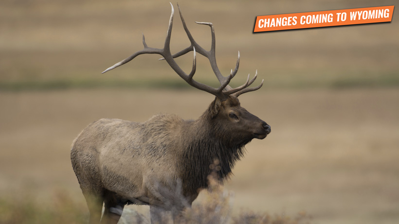 New Wyoming bill would impact nonresident hunters