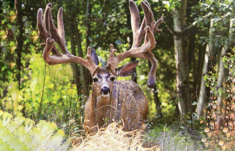 Oregon Buck Norris buck is dead