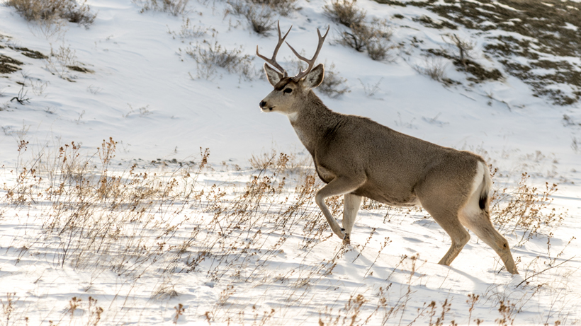 Oregon boy riding mule deer