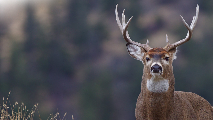 Oregon cancels Blue Mountain deer hunts