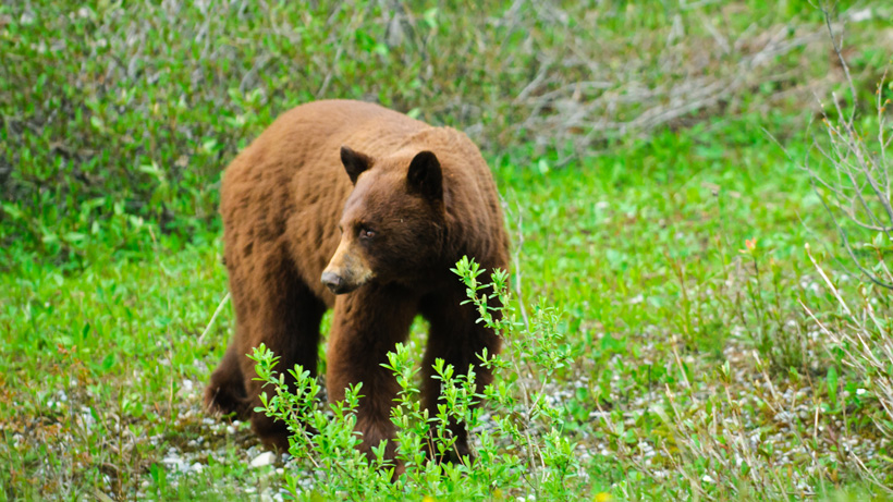 Oregon nonresident hunting opens up after COVID-19
