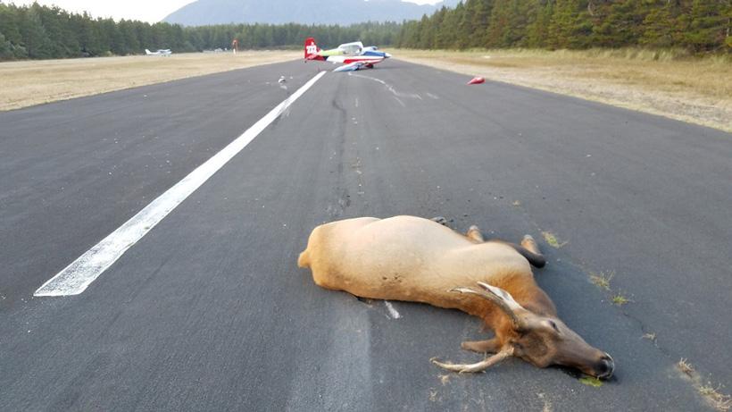 Oregon plane crash after hitting elk