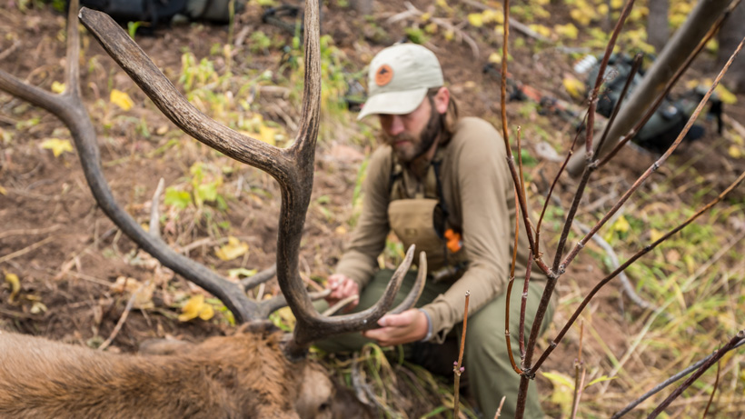 Overview of Colorado elk hunting opportunities