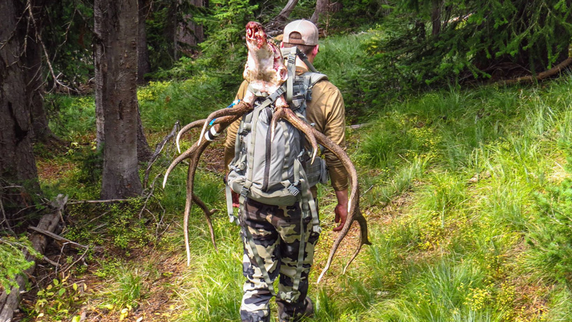 Packing out a Montana bull elk