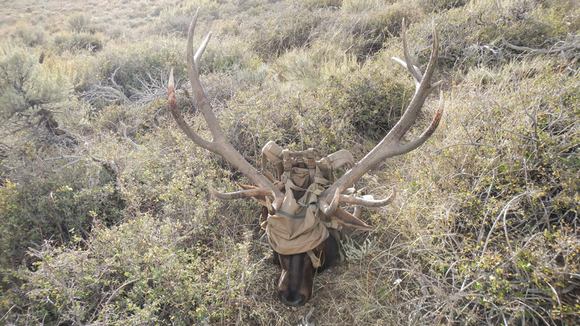 Packing out a Nevada archery bull elk