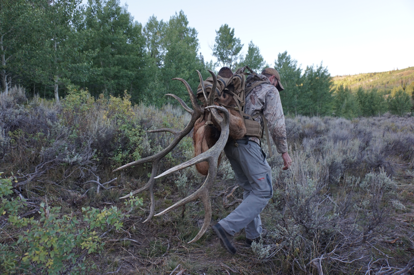 Packing out the bull elk