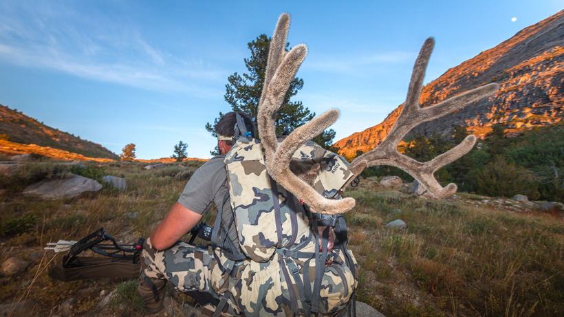 Packing out an archery mule deer