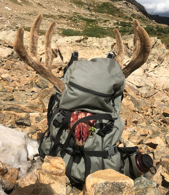 Packing out mule deer buck