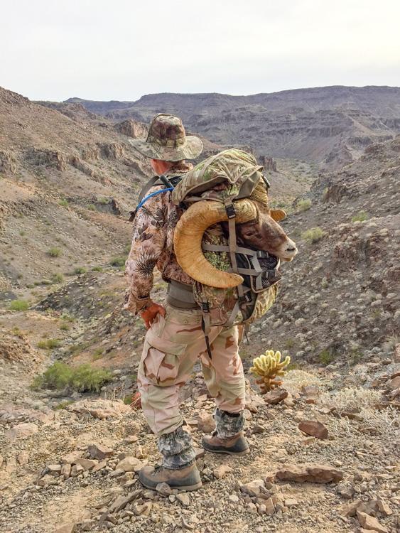 Packing out the desert bighorn ram
