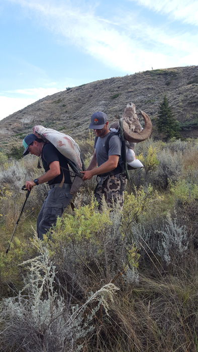 Packing out the bighorn sheep meat