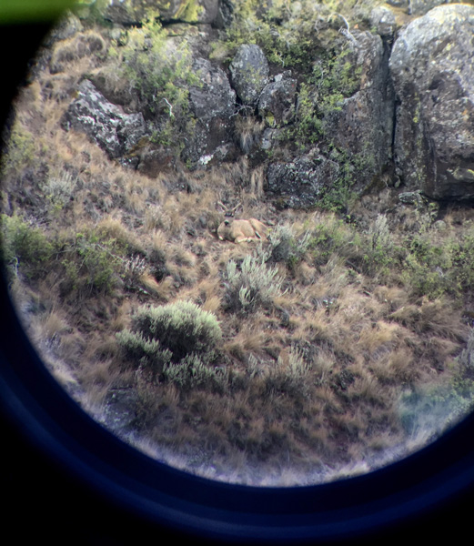 Phone Skope photo of Austin Folmans mule deer