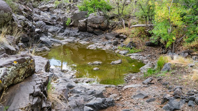 Water hole AZ