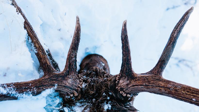 Best elk hunting opportunities in Arizona
