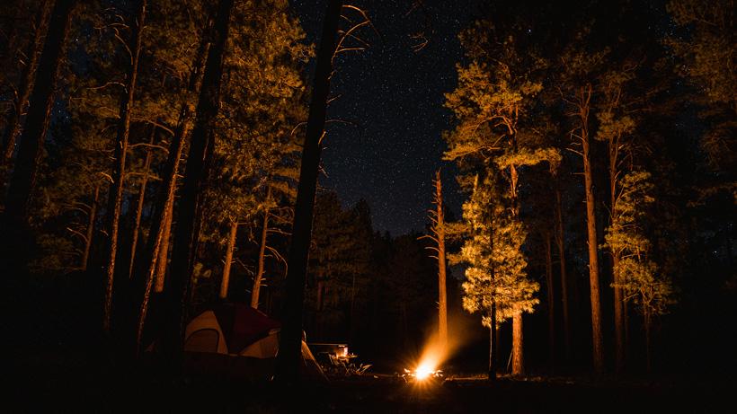 Kirchner bear camp