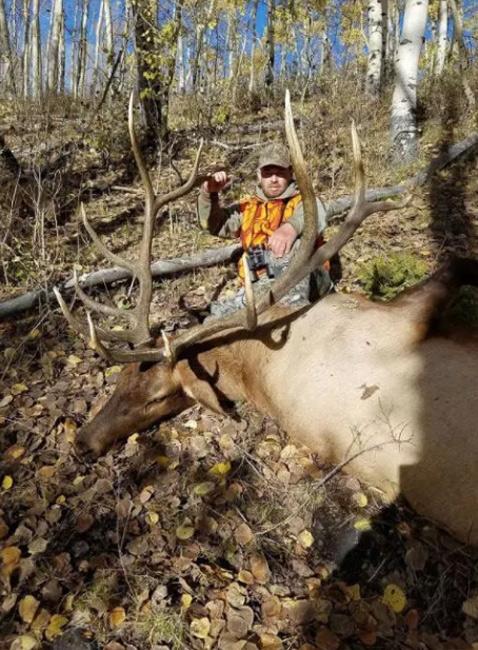 Poached trophy bull elk in Utah