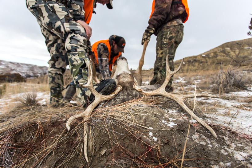 Preparing the deer
