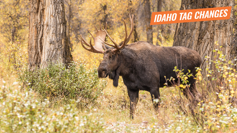 Proposed Idaho moose bighorn sheep and mountain goat tag changes