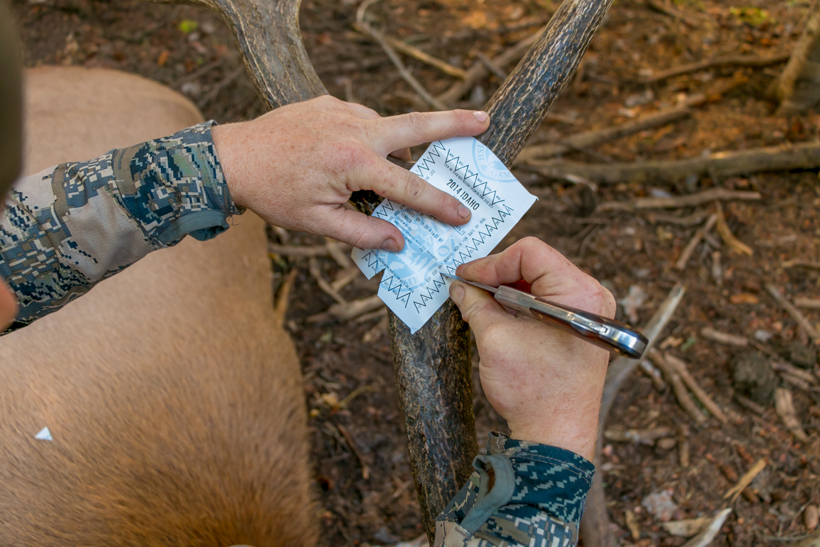 Punching an Idaho elk tag