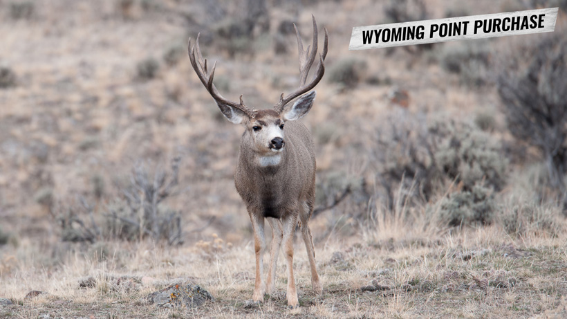 Purchasing Wyoming hunting preference points