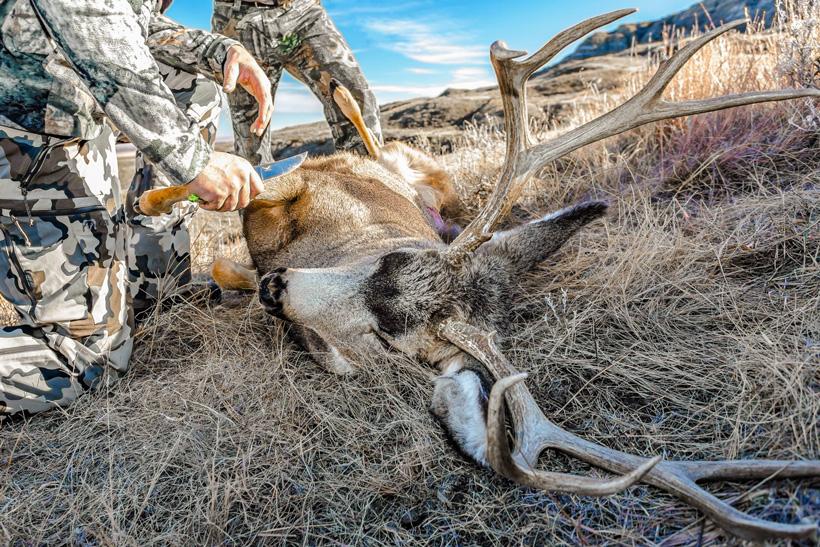 Quartering up Steve King's 2015 mule deer buck