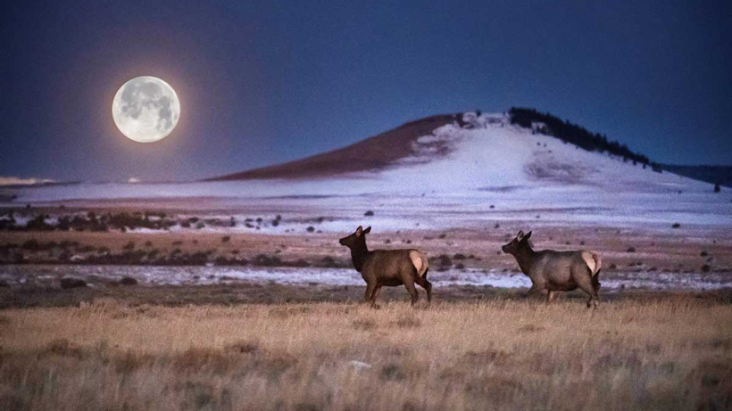RMEF helps secure critical range in New Mexico