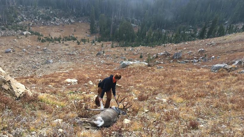 Recovering a mule deer from a steep alpine basin