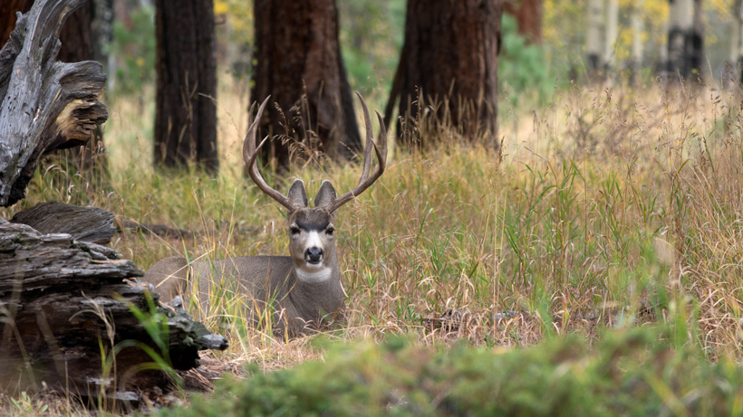 Montana holds special archery hunt in and around Roundup