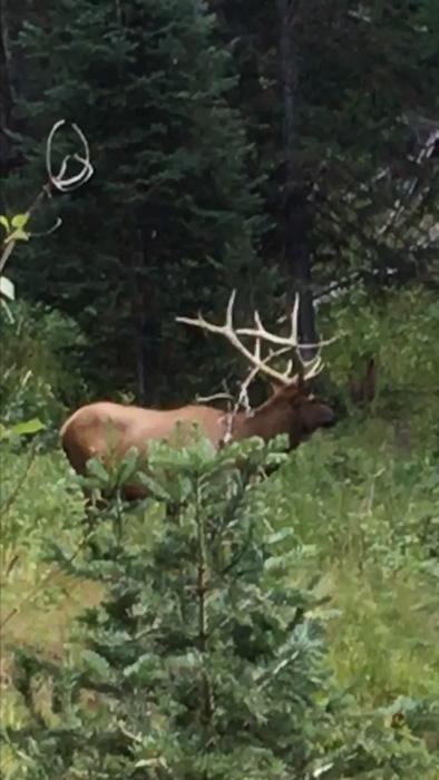 Scouting Utah bull elk