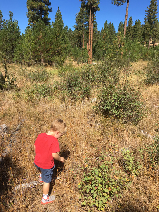 Scouting for elk with kids