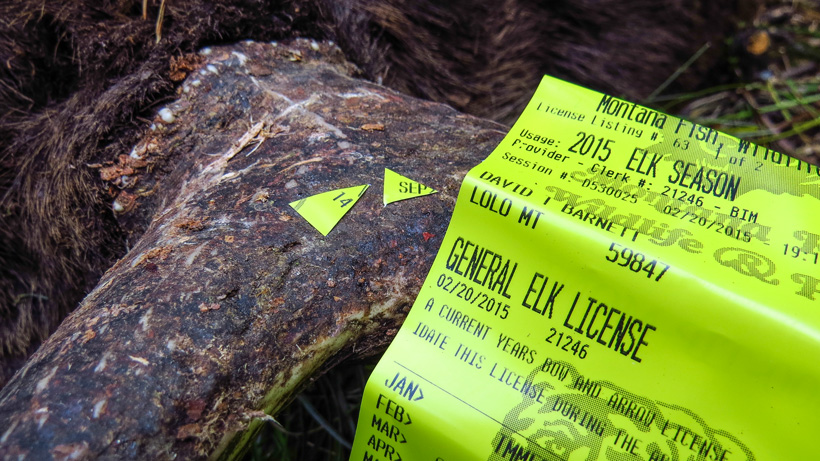 Scout now to help fill more elk tags this fall