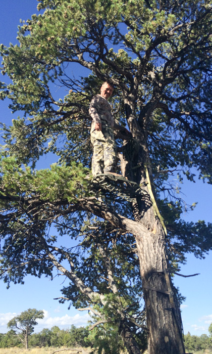 Setting up a treestand for a Utah elk bowhunt