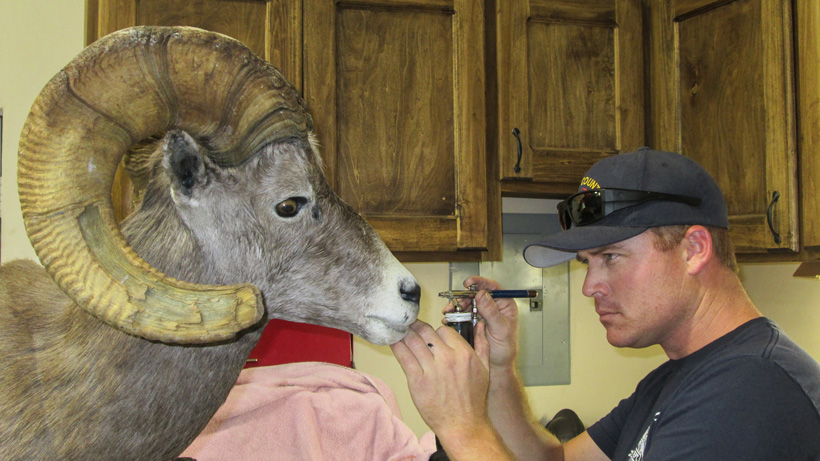 Taxidermy care for lasting results
