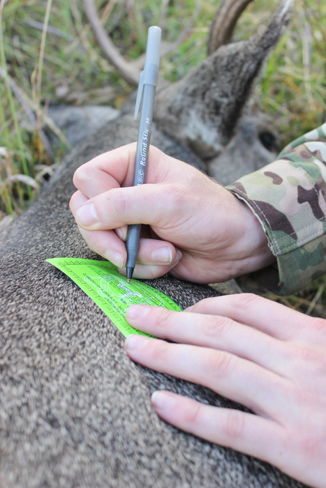 Signing mule deer tag after harvest