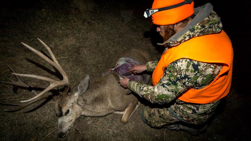 Sitka Jetstream Jacket with Colorado mule deer