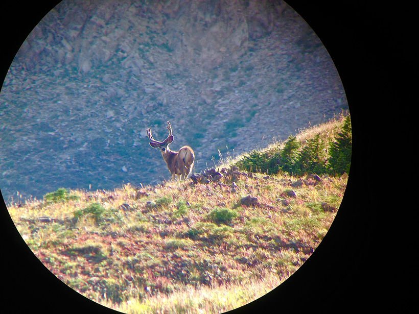 Smaller mule deer we passed up