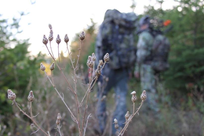 Spot and stalk elk hunting tactics