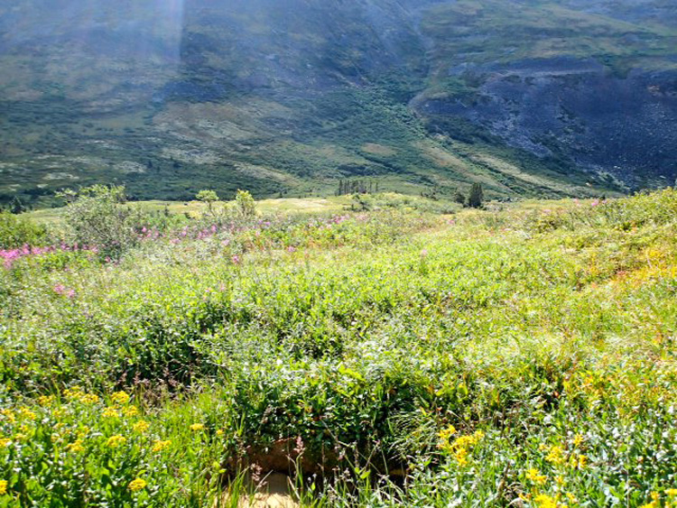 Stalking terrain in Dall sheep country