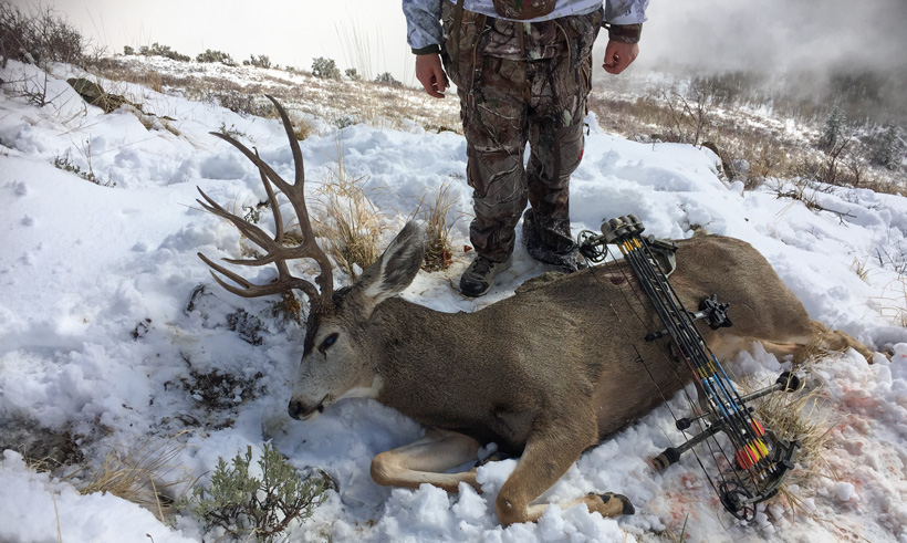 Standing over Utah archery mule deer