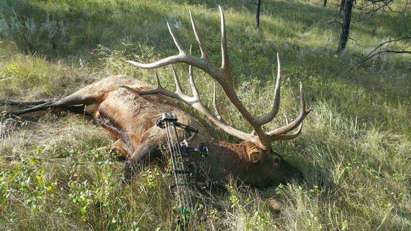 Steve Felix Montana archery world record elk field photo