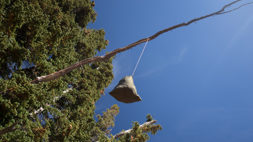 Suitable tree for hanging camping food away from bears