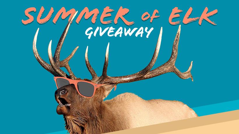 Summer of elk giveaway