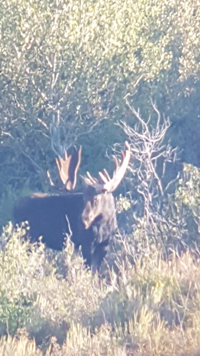 Summer scouting for Idaho moose