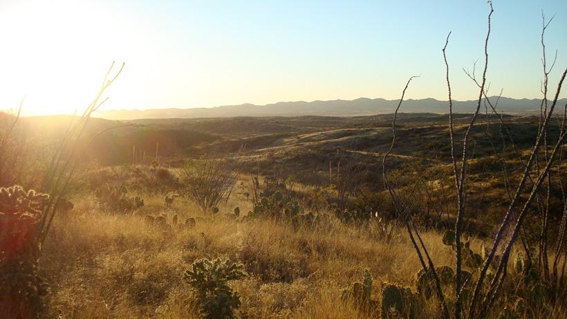 Sunrise hunting in the desert